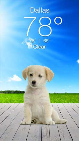 Weather Puppy Screenshot 1
